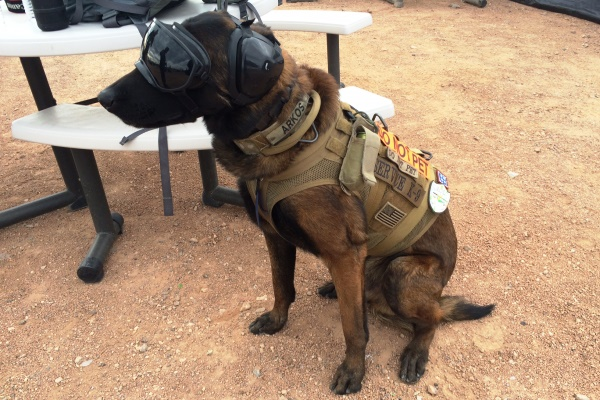 Service Dog Ear Protection