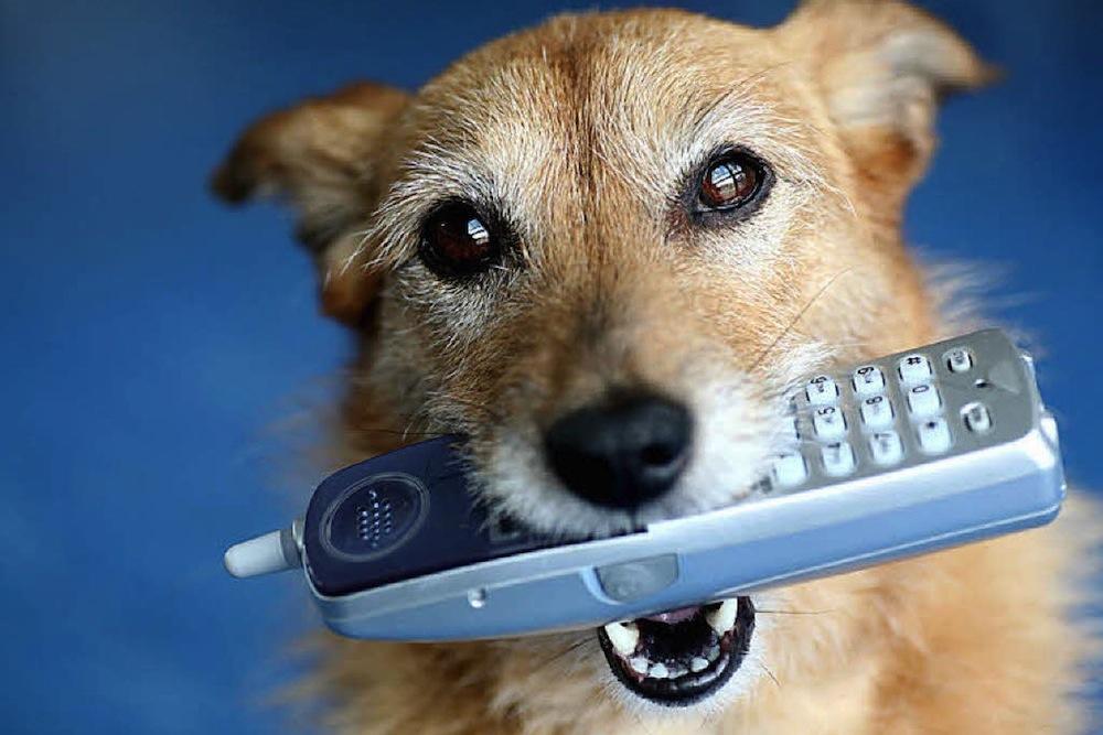 Va Program Provides Service Dogs To Veterans With Mental Health