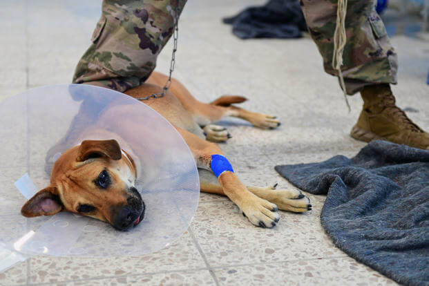 A dog awakes after surgery in Puerto Cortes, Honduras during Continuing Promise 2018. (U.S. Navy photo/Kayla Cosby)
