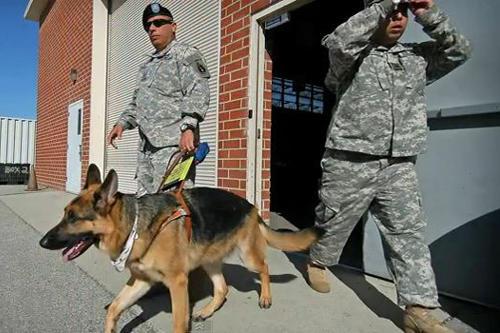 Seeing Eye Dogs For Blind Veterans
