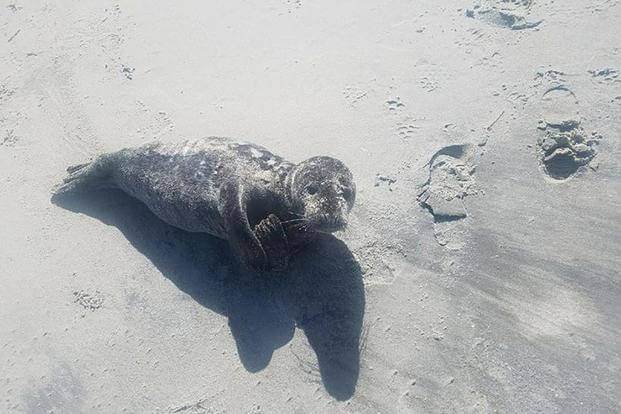A baby seal found stranded on a Jersey Shore beach was rescued by the Coast Guard. Coast Guard/Facebook photo